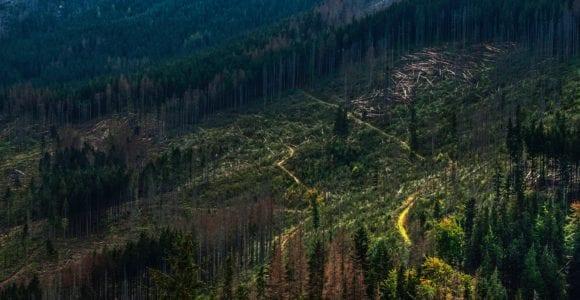 deforestation scaled